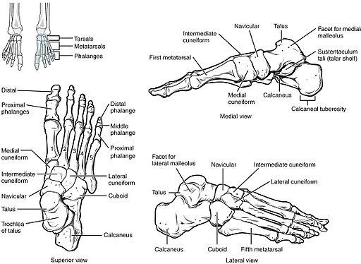 ízületi fájdalom a lábcsontról)