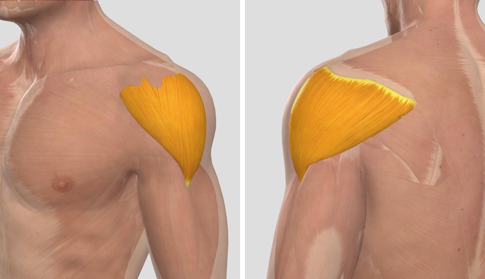 vállízület fájdalom kezelése otthon artrózis kezelése 1-2 fok