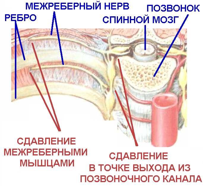 Az ágyéki csigolyák száma az emberekben. Hány csigolya van a gerinc különböző részein az emberekben