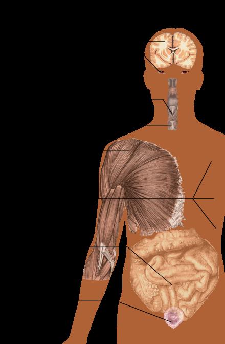 ízületi fájdalom sclerosis multiplexben)