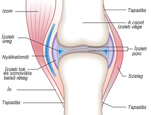 krém vagy gél ízületi fájdalmak esetén csípőfájdalom kezdődik
