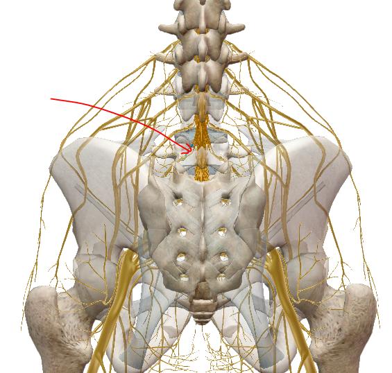 ízületi rák az alsó hátfájás