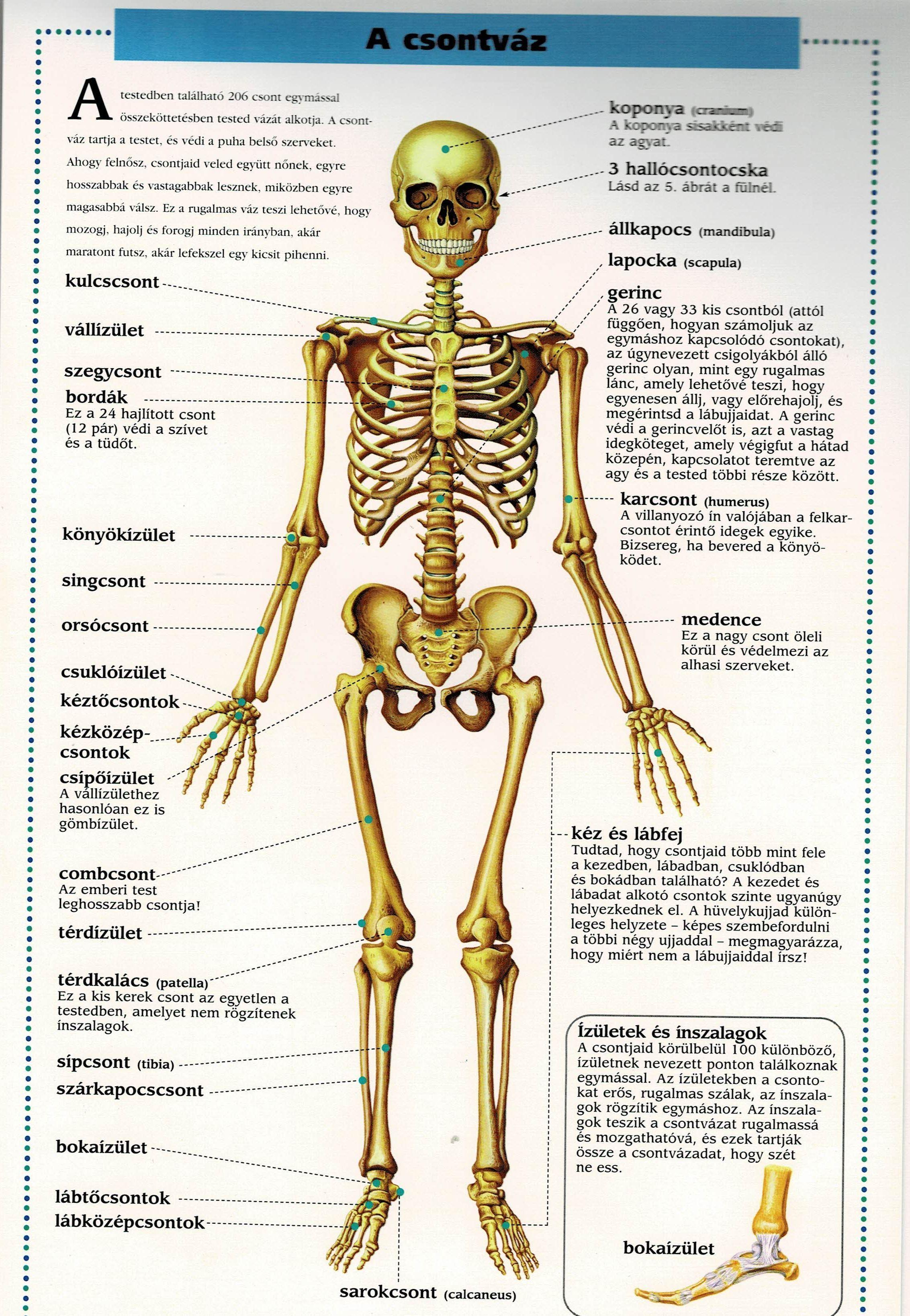 don a bokaízület artrózisával