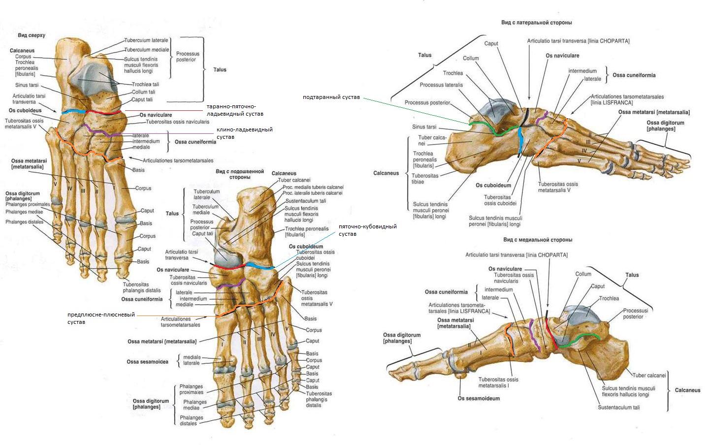 a betegség ram-calcaneo-navicularis ízülete)