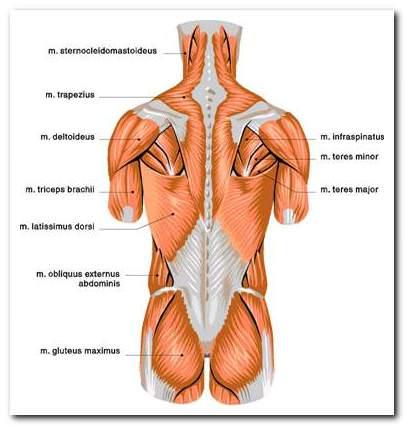 a mellkasi gerinc csontritkulása