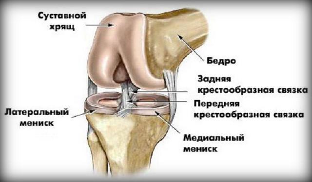 milyen gyakorlatok a térdízület fájdalmára