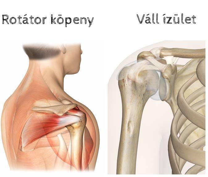 hatékony kenőcs a nyaki gerinc csontritkulásáért