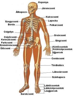 a csontok ízületei fájnak)
