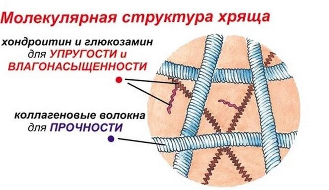 intramuszkuláris glükózamin készítmények)