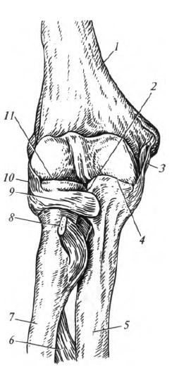 a vállízület blokkjának osteochondrosis)