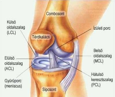 a térdízület besorolása fájdalom mindkét bokaízületben