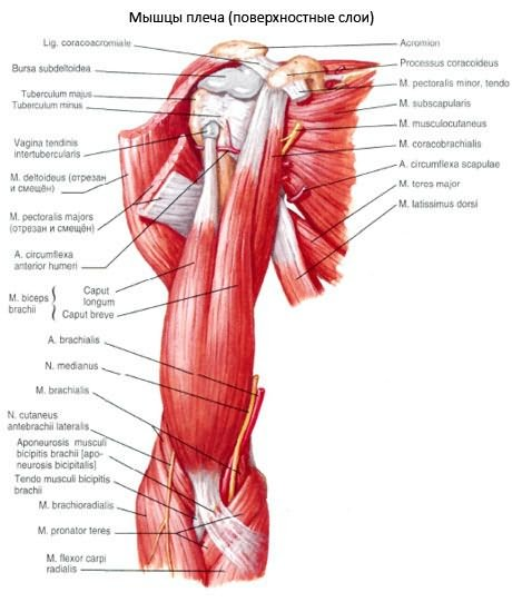 mi a vállízület 2. fokú artrózisa)