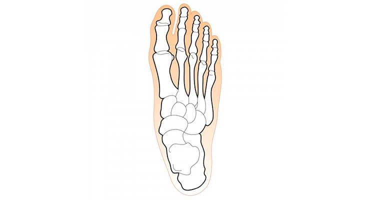 Milyen neve az emberi láb? Hasznos lábcsontok