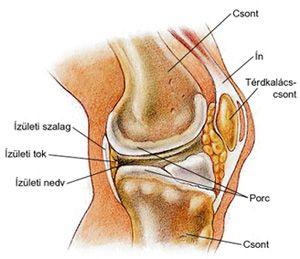 ízületi és térdfájdalom artrózis