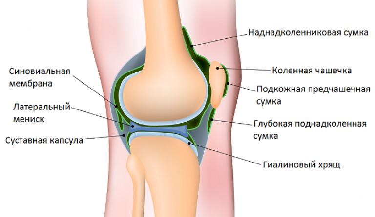 a bal térdízület deformáló artrózisa 3 fok glükózamin-kondroitin kapszulák áttekintése