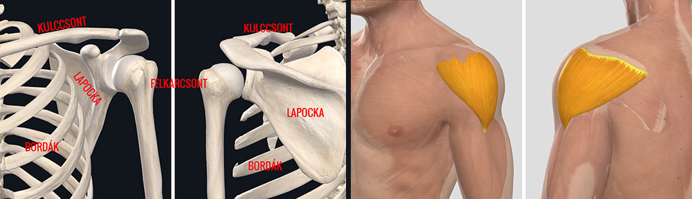 a vállízület ízületi gyulladása okozza