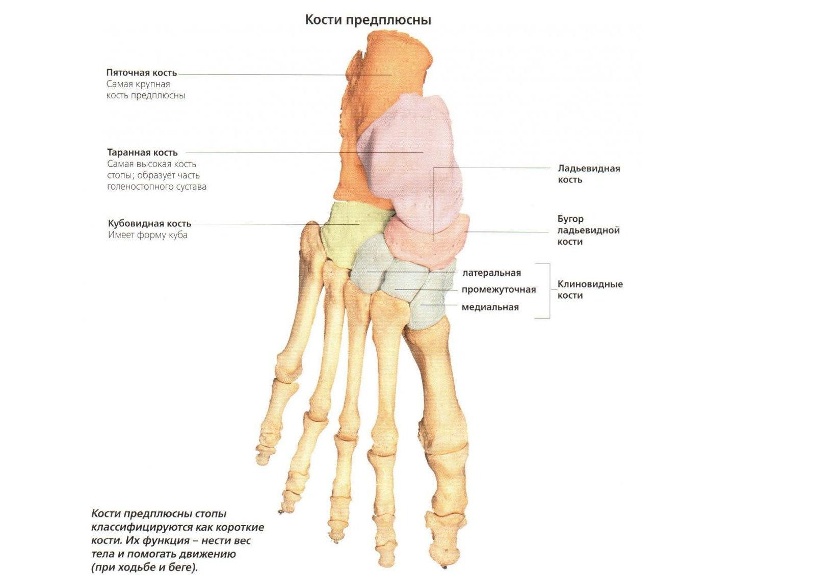 az 1. fokú talaris navikális ízület deformáló artrózisa)