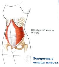 a térdízület kötőelemeinek fájdalma)