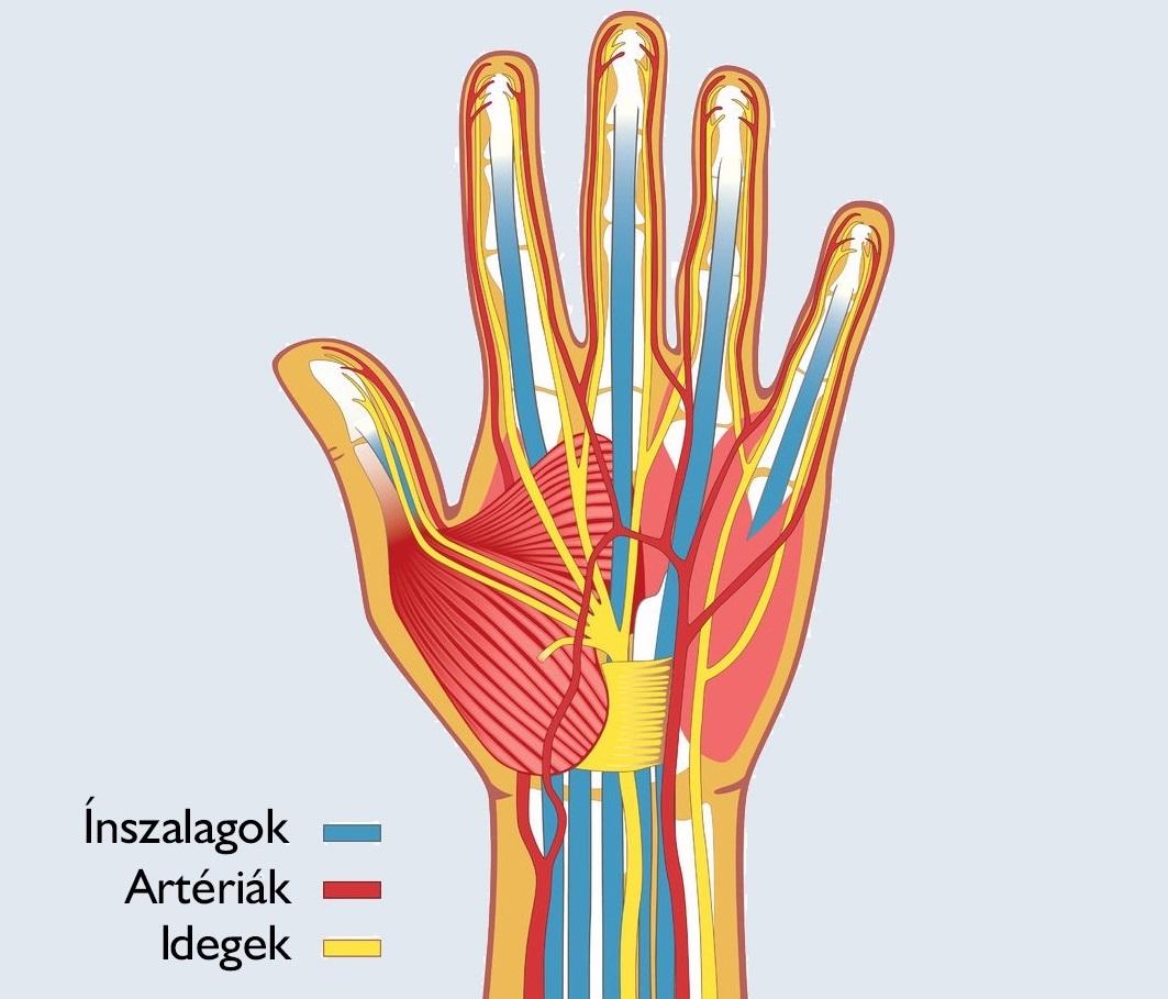 kéz sérülés)