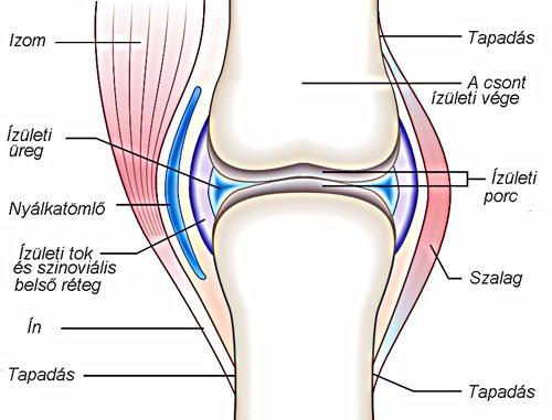 ízületi gyulladás és térdízületi gyulladás kezelése
