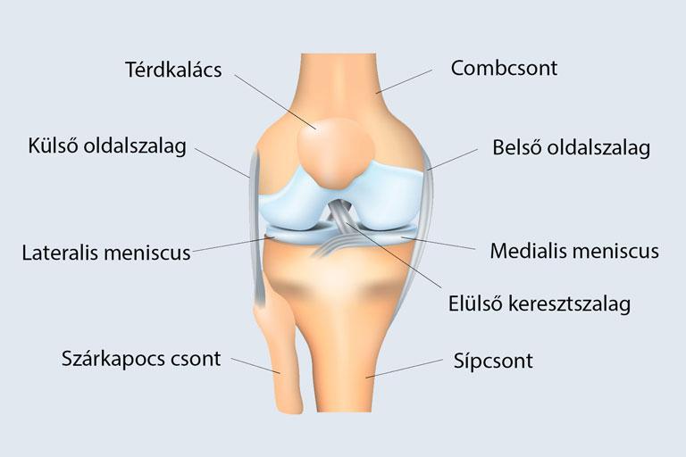 a térdízület belső oldalsó ligamentuma ha a könyök ízülete fáj