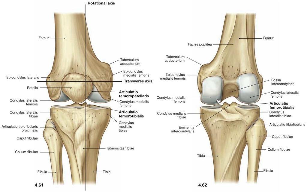 a térdízület belső oldalsó ligamentuma a kézízületek krónikus ízületi gyulladása