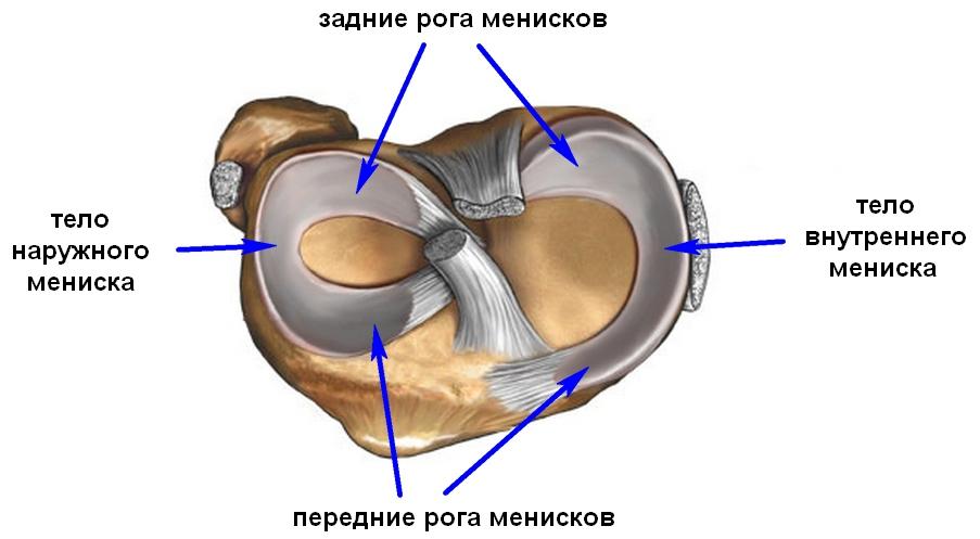 a térdízület mediális meniszkuszának elülső kürtének károsodása a lábszár fájdalma nem ízület