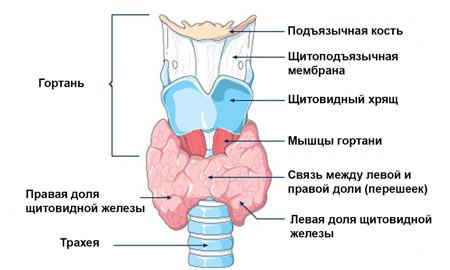 lycopid ízületi fájdalmak esetén)