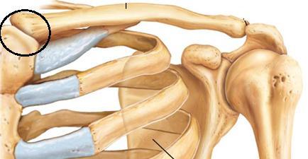 A térd és a sarok csontritkulása