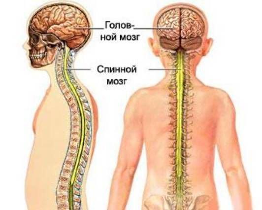 gerincvelő derékközi csontritkulása artrózisa)
