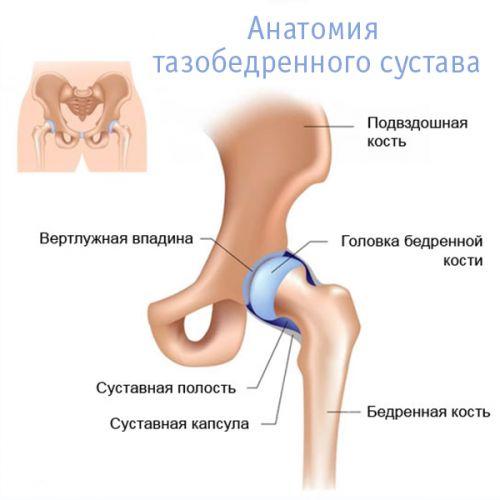 az úszás hasznos a csípőízület artrózisában)