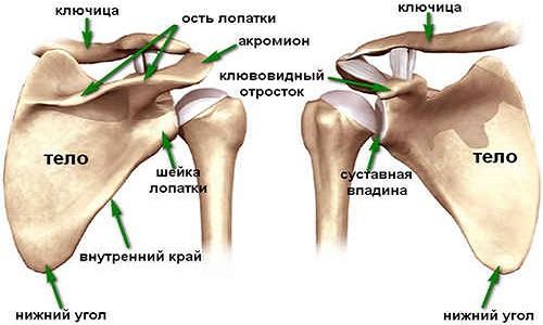 a vállízület akut artrózisának kezelése)