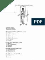 kezelés s4-s5 gerinctelen ízületi gyulladás