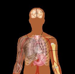 std-k által okozott ízületi fájdalmak a csípőízületek gyulladásának okai