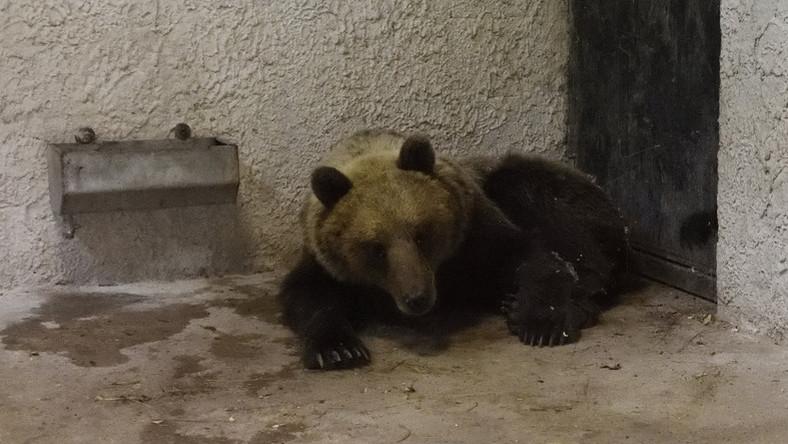 hogyan kell kezelni az ízületeket és a medvét