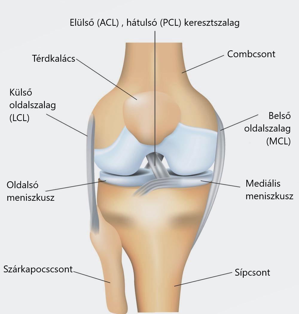 térdízületi kezelés ultrahanggal történő kezelése)