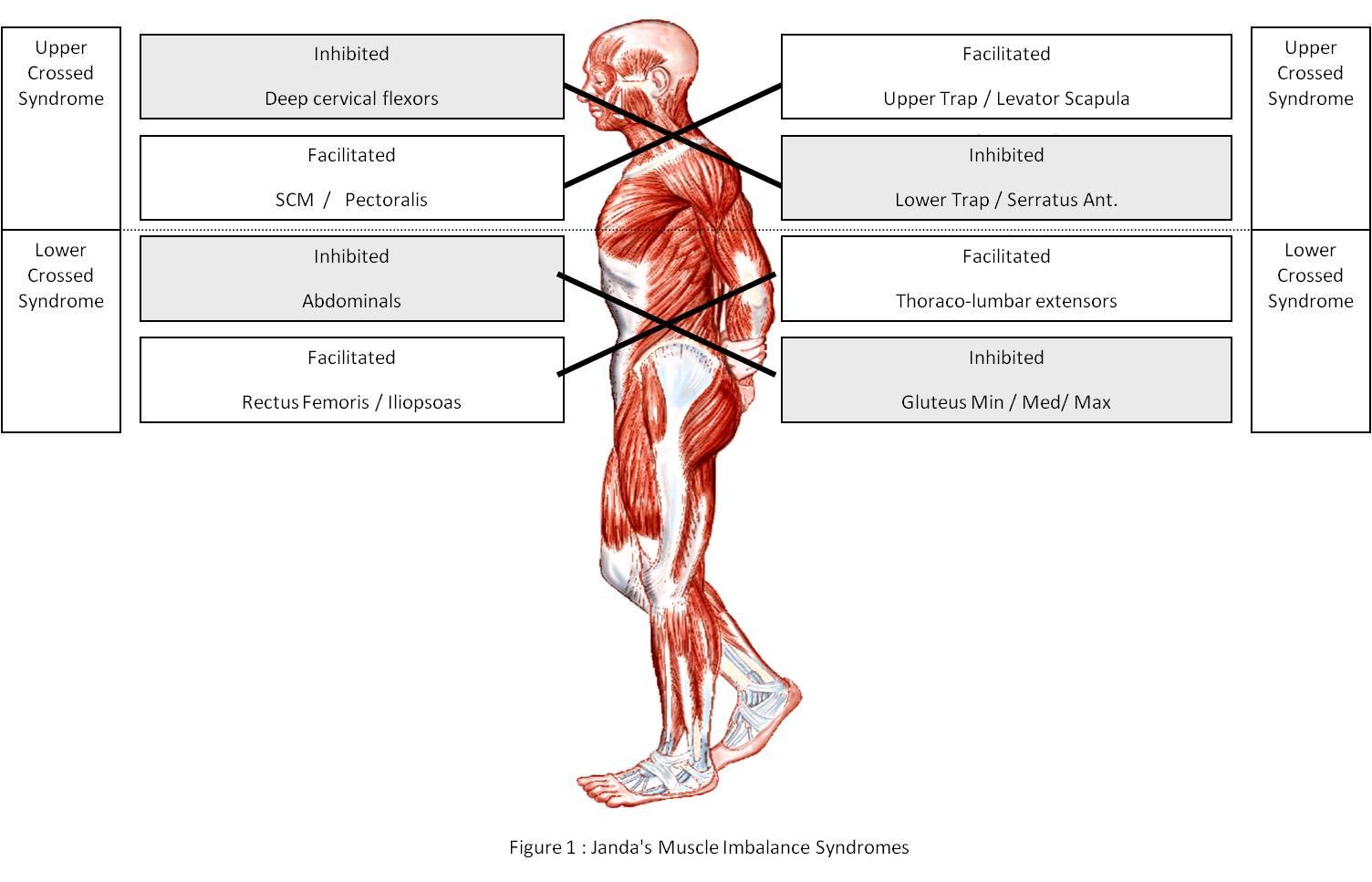ízületi fájdalom hasi fájdalom argo termékek ízületi fájdalmak kezelésére