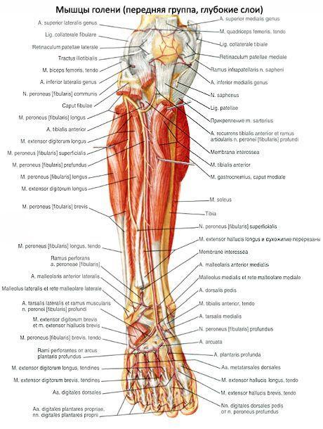 a lábak ízületei a medence területén hogyan kezeljük a térdízület-tablettákat