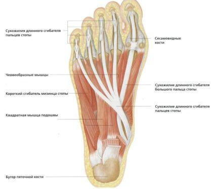 az alsó lábszár, a bokaízület és a láb károsodása)
