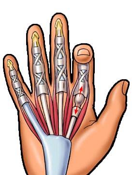 Reumatológia / ortopédia   szeplaklovasudvar.hu