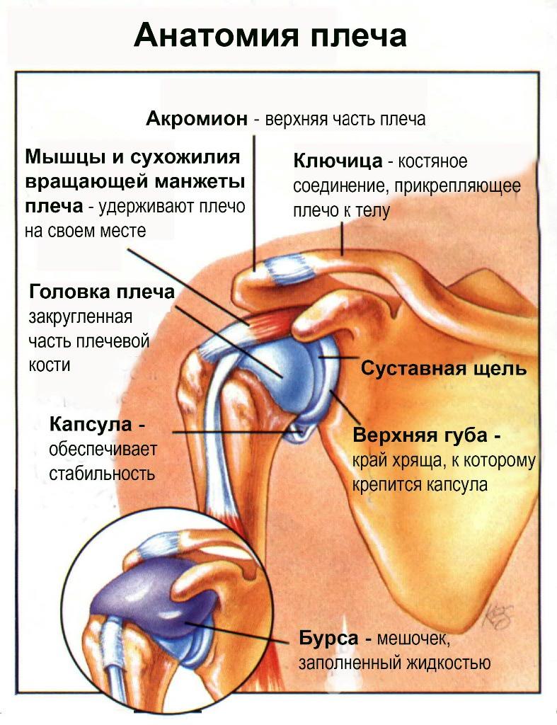 vállfájdalom ankilozó spondilitisz esetén
